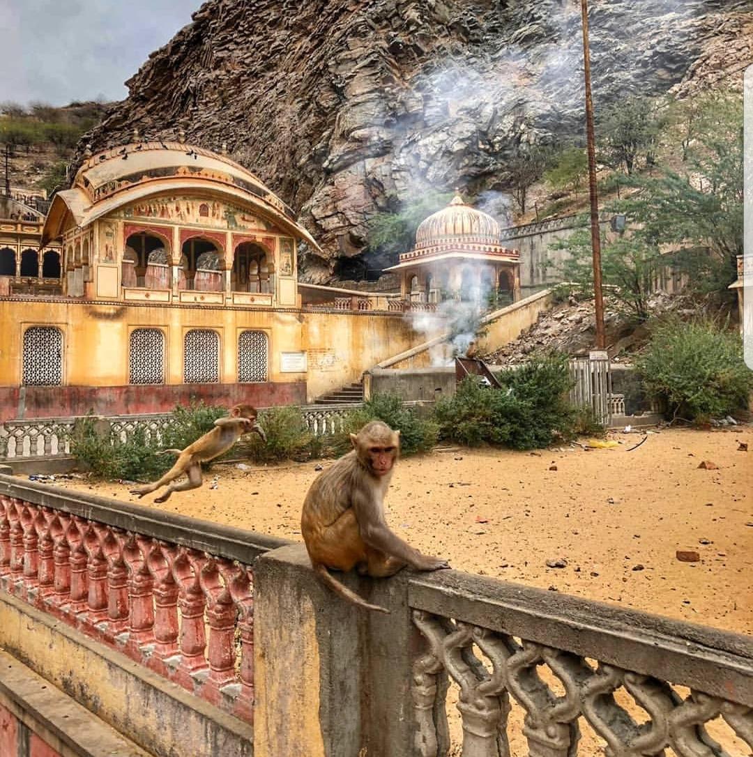 האם הסוד לחיזוק האון המיני של הנשים מסתתר במקדש הקופים בג'אייפור?